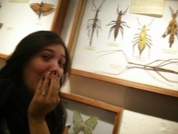 Exposição de insetos