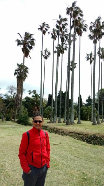 Nessa terra tbm tem palmeiras